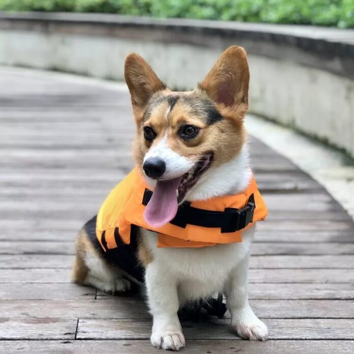 Shark Life Vest For Dogs on Ecomhunt
